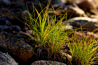 Grass on Forest Floor